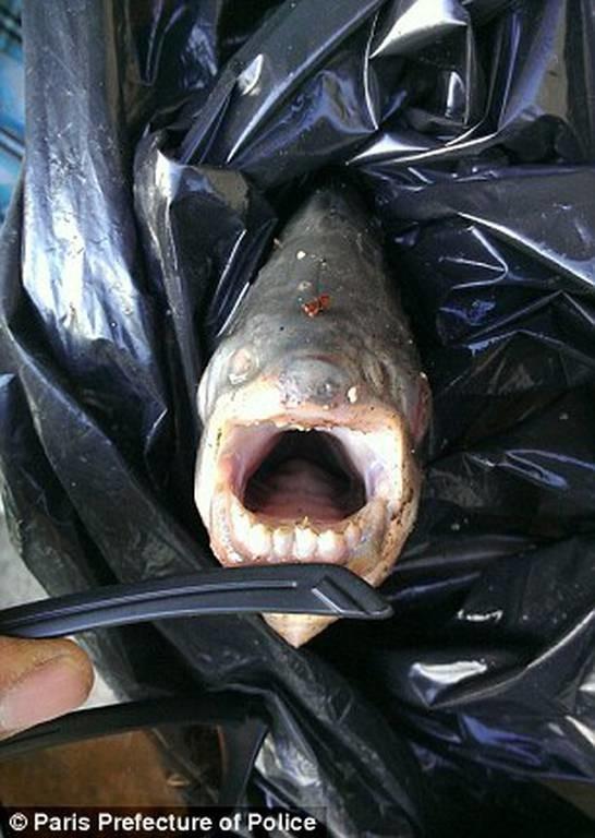 Νιου Τζέρσεϊ: Εντοπίστηκε ψάρι που δαγκώνει… (photos+video)