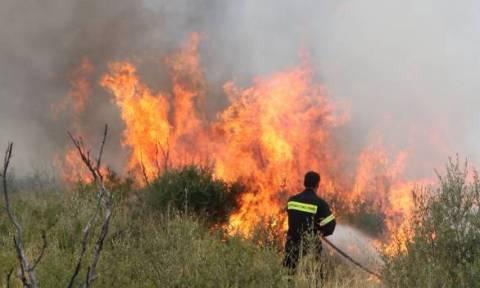 Πυρκαγιά σε εξέλιξη στα Κωσταίικα Χαλανδρίτσας
