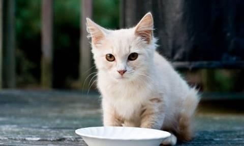 Τεστ: Μάθε τι ράτσα γάτας πρέπει να έχεις ανάλογα με το χαρακτήρα σου
