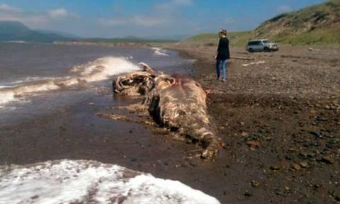 Μεταλλαγμένο προϊστορικό «τέρας» με ρύγχος, μαλλιά και… γούνα εμφανίστηκε στη Ρωσία (photos)