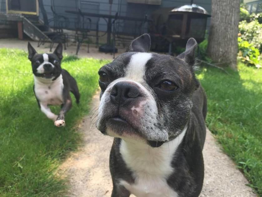 Σκύλος ρίχνει θανατηφόρα ματιά σε... άσπονδο εχθρό του (photos)
