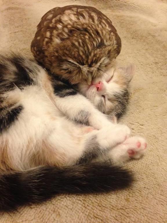 Ένα γατί μια κουκουβάγια και έχεις το viral video του μήνα (video)