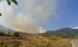 Πυρκαγιά σε εξέλιξη στη Χασιά Αττικής