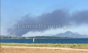 Φθιώτιδα: Μεγάλη πυρκαγιά σε εργοστάσιο με λάδια (photos)