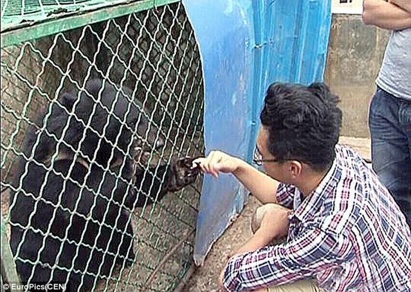 Σοκαρισμένος Κινέζος ανακαλύπτει ότι τα κουτάβια του ήταν… αρκούδες!