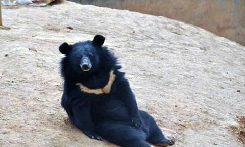 Σοκαρισμένος Κινέζος ανακαλύπτει ότι τα κουτάβια του ήταν… αρκούδες! (photos)