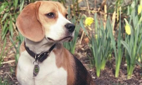Κατερίνη: Συνελήφθη 38χρονος διότι έδεσε και έσερνε με μοτοσικλέτα σκύλο
