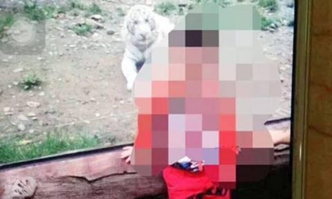 Κίνα: Δίχρονος έχασε το χέρι του από επίθεση τίγρη