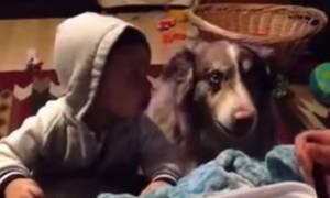 Πανέξυπνος σκύλος λέει την πρώτη του λέξη πριν από το μωράκι! (video)