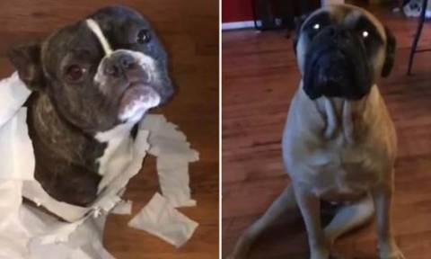 Άμα έχεις τέτοιους… σκύλους τι τους θέλεις τους ρουφιάνους! (video)
