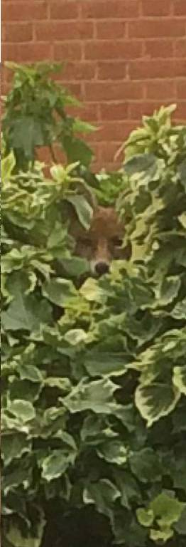 Quiz: Μπορείτε να εντοπίσετε την αλεπού;