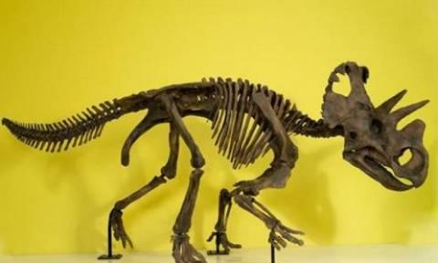 Νέο είδος δεινόσαυρου ανακάλυψαν παλαιοντολόγοι