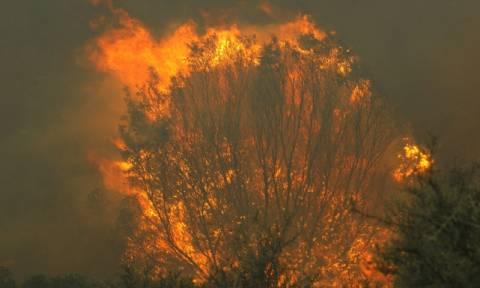 Σε ύφεση η φωτιά στο Ζευγολατιό Κορινθίας