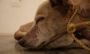 Αλεξανδρούπολη: Φυλάκιση και χρηματικό πρόστιμο σε 70χρονο για κακοποίηση σκύλου