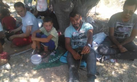 Λέσβος:  Οχιά σερνόταν ανάμεσα στα πόδια μετανάστη, καθώς έτρωγε! (video)