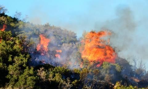 Ζάκυνθος: Υπό πλήρη έλεγχο η φωτιά στο Καλαμάκι