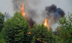 Νέα πυρκαγιά ξέσπασε κοντά στην Χαλκίδα