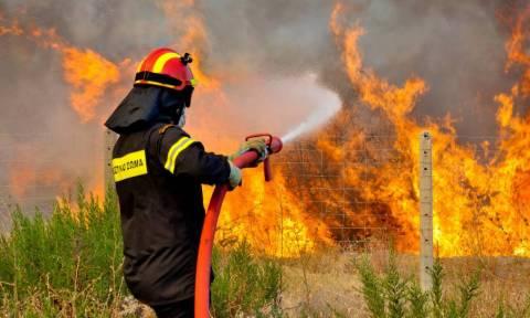 Πυρκαγιές - ΚΕΔΕ: Σε ετοιμότητα όλοι οι Δήμοι της Αττικής