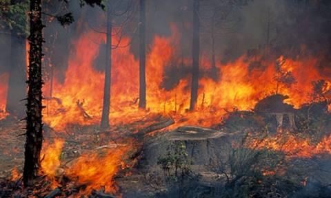 Πυρκαγιές - ΚΚΕ: Κατηγορεί την κυβέρνηση για έλλειψη προστασίας των δασών