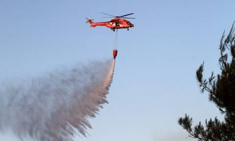 Πυρκαγιές: Έρχεται εναέρια βοήθεια από τη Γαλλία