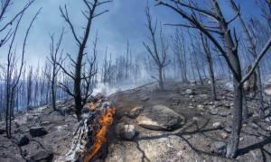 Πυρκαγιά - Καρέας: Αγνοείται περιπατητής