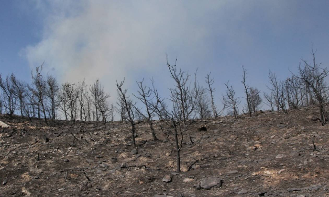 Μεγάλη πυρκαγιά και στο Δίστομο Βοιωτίας - Οι φλόγες κατευθύνονται προς τα σπίτια