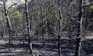 Φωτιά – Καρέας: Στάχτη κι αποκαΐδια άφησε πίσω της η πύρινη λαίλαπα (photos)