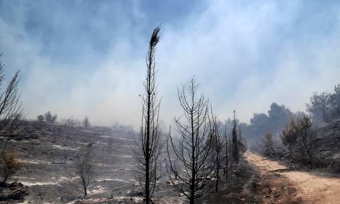 Σε ύφεση τα πύρινα μέτωπα - Σε επιφυλακή οι πυροσβεστικές δυνάμεις για τη φωτιά της Ζακύνθου