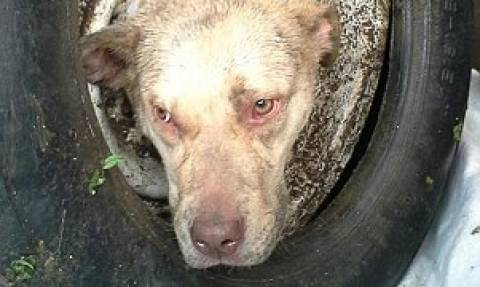 Σκύλος κόλλησε μέσα σε ζάντα αλλά σώθηκε (photos)