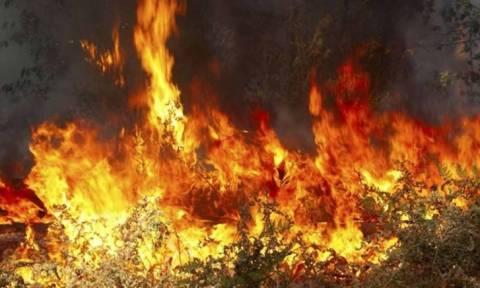 Φωτιά: Νέα μέτωπα σε Τρίπολη και Αιτωλοακαρνανία  - Σε ύφεση η πυρκαγιά στην Αργολίδα