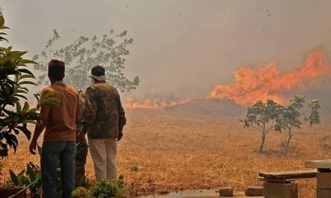 Σοκαριστικές φωτογραφίες: Η Λακωνία πριν και μετά τη φωτιά