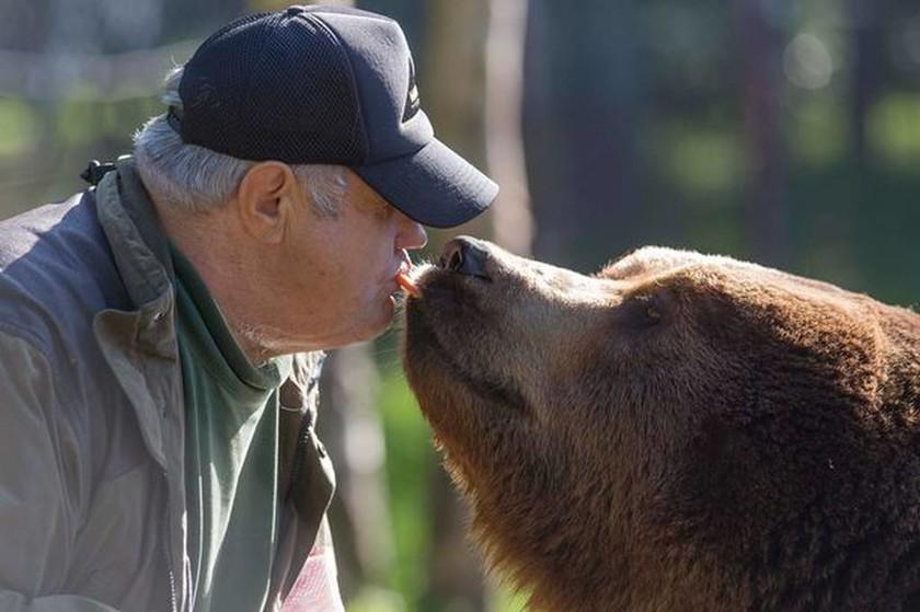Γνωρίστε τον άνθρωπο που κοιμάται με τις αρκούδες και τις ταΐζει με το… στόμα! (video)