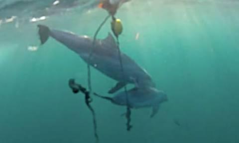 Συγκλονιστικό βίντεο: Δελφίνι προσπαθεί να σώσει το μωράκι του από παγίδα καρχαρία!