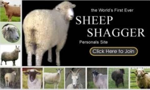 Τρεις άνδρες διατηρούσαν οίκο ανοχής με... προβατίνες