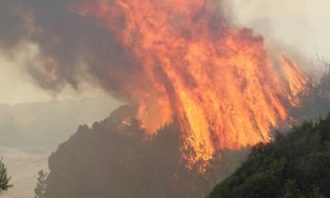 Ηλεία: Σε ύφεση η πυρκαγιά στο Κουνουπέλι Ηλείας