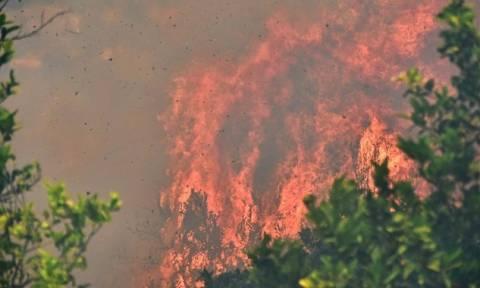 Σε ύφεση η πυρκαγιά στον Κουβαρά Κερατέας