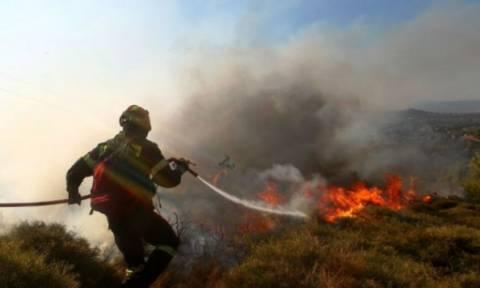 Πυρκαγιά στην Εύβοια - Γλύτωσε από τις φλόγες ο οικισμός Μακρυκάπα (video - photos)