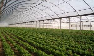 Συναντήσεις για το πρόγραμμα αξιοποίησης των γεωργικών προϊόντων