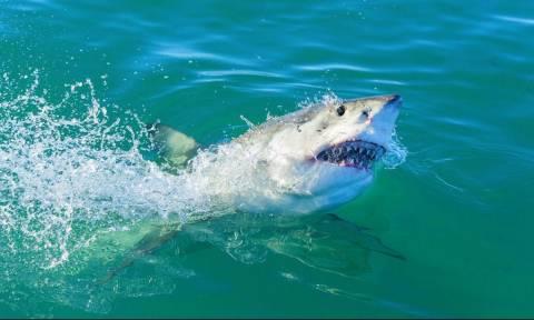 Φρίκη: Τον κατασπάραξε καρχαρίας μπροστά στα μάτια της κόρης του