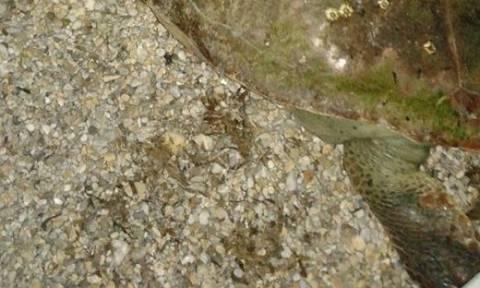 Θλιβερό θέαμα σε παραλία της Κομοτηνής (photo)