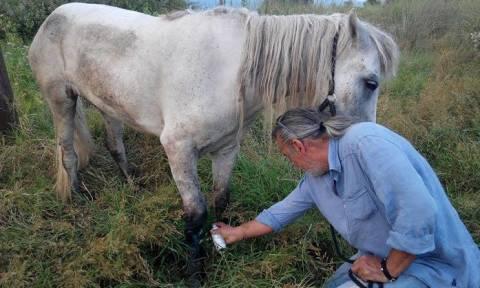 Κομοτηνή: Θανατώθηκε άλογο που αργοπέθαινε - Δόθηκε... μάχη με τη γραφειοκρατία!