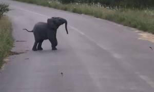 Το βίντεο που κάνει θραύση: Ελεφαντάκι παίζει με τα χελιδόνια  (video)