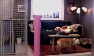 Μέχρι πού μπορεί να φτάσει κάποιος που λατρεύει τον σκύλο του (video)