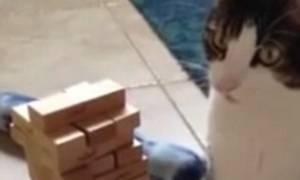 Χαρισματικό γατί παίζει jenga και... τινάζει το ίντερνετ στον αέρα (video)