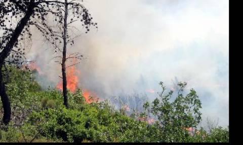 Κίνδυνος δασικών πυρκαγιών στην Κύπρο
