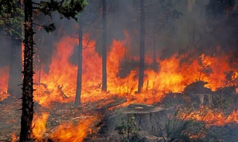 Τρίκαλα: Πυρκαγιά σε εξέλιξη στην Καλαμπάκα