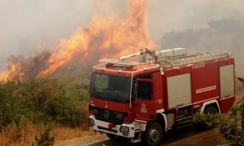 Μάχη με τις φλόγες δίνουν οι πυροσβέστες στην Πάλαιρο - Το πύρινο μέτωπο έχει έκταση πέντε χλμ