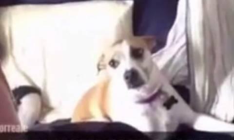 Η selfie του αιώνα – Τα σκυλιά το κάνουν καλύτερα! (video)