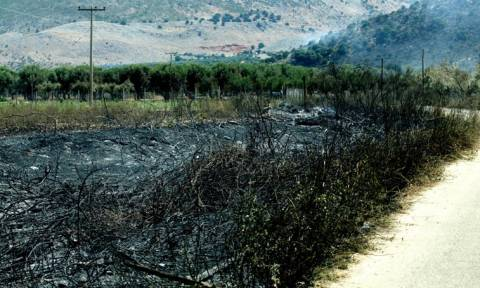 Σε ύφεση η πυρκαγιά στην Πάλαιρο