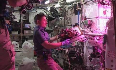 Απίστευτο: Αστροναύτες τρώνε το πρώτο διαστημικό... μαρούλι! (video)